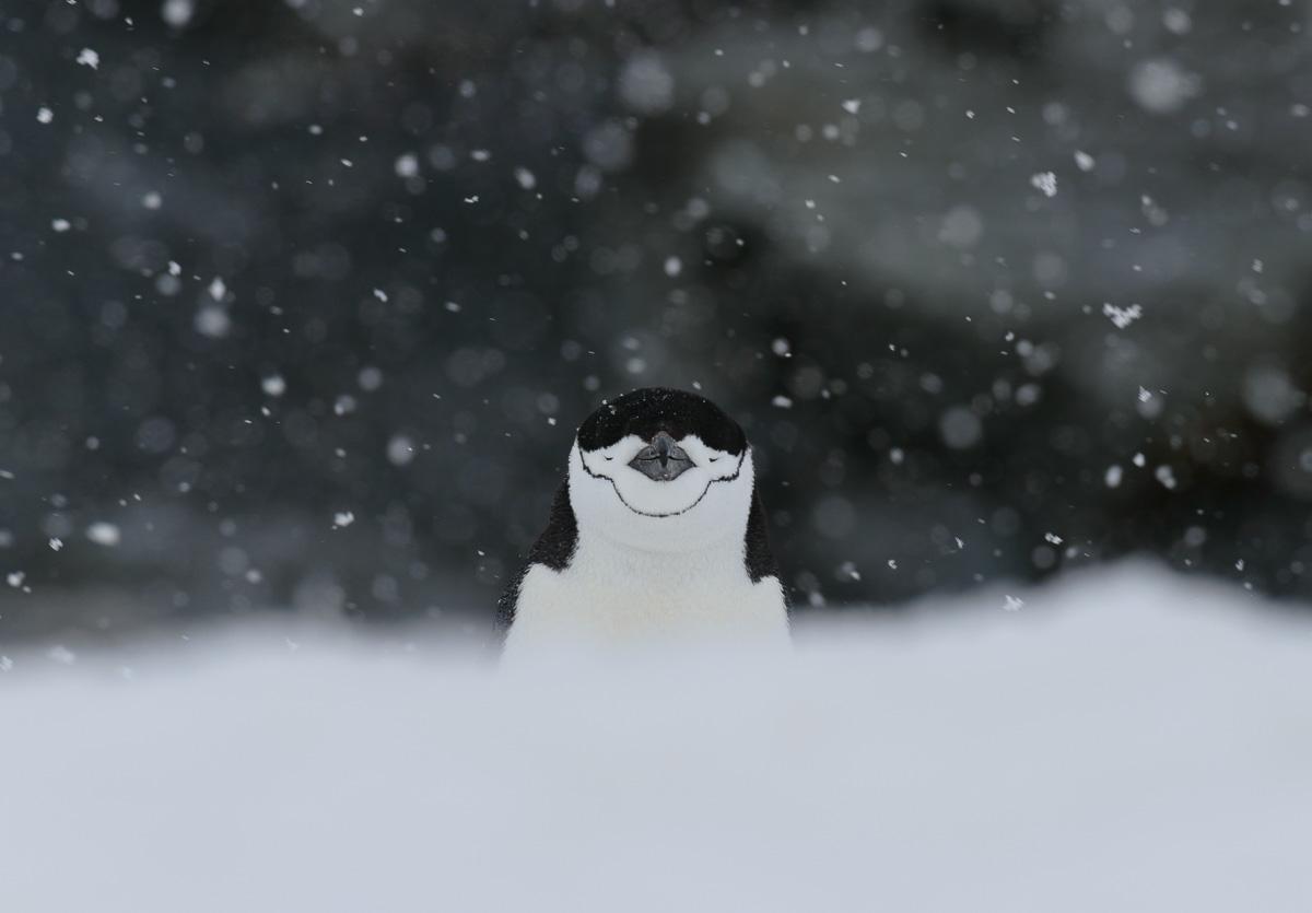 Antarctica Photo Expedition 2016