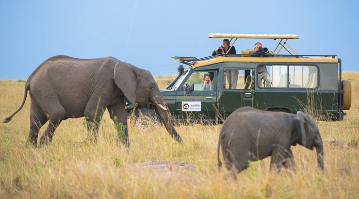 Premier Photographic Safaris