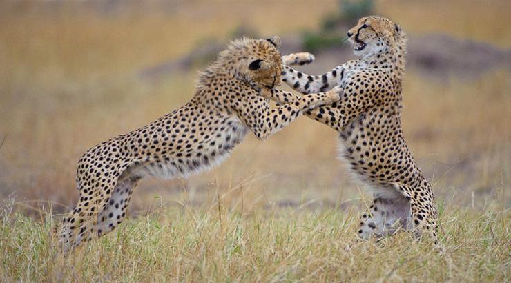 Masai Mara Migration Safari 12-19 Sept 2015